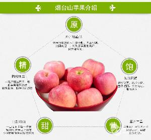 有机红富士苹果基地直供