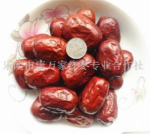 六星新疆红枣批发厂家报价趋势