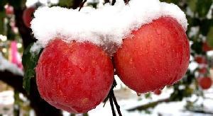 新疆阿克苏苹果|冰糖心苹果|原产地顺丰包邮