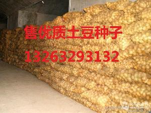 马铃薯种子