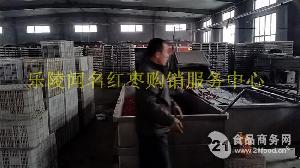 新疆大枣厂家批发