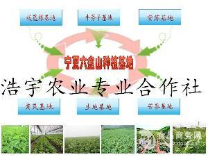 槐角提取物染料木素
