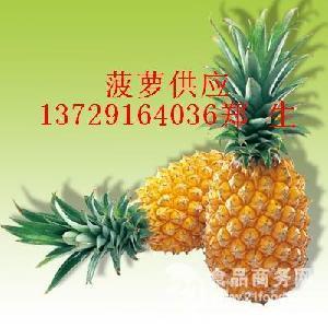 海南菠蘿批發,海南菠蘿代理,海南菠蘿代辦