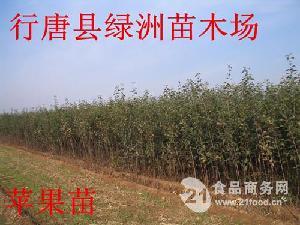 河北省红富士苹果苗批发