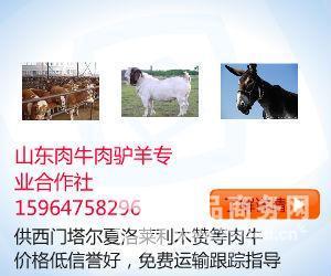 3-6个月驴苗成年驴价格