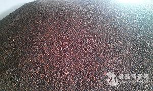 优质榨油茶籽