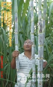 北方甘蔗新品种北密一号甘蔗