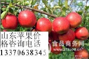 优质红富士苹果