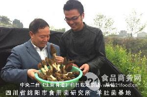 羊肚菌商業化栽培基地