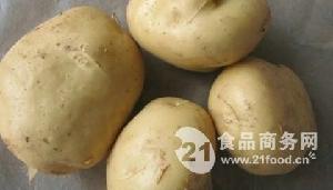 早大白脱毒马铃薯种子