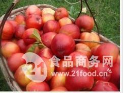山东红富士苹果上市了