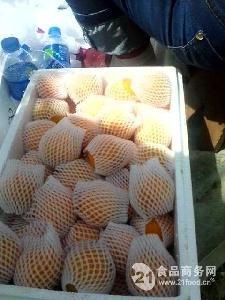 大棚金太陽杏