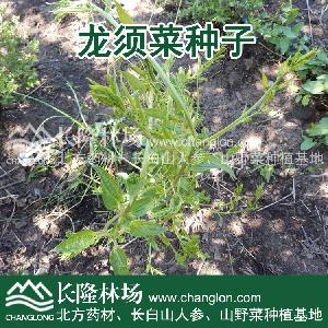 龙须菜种子