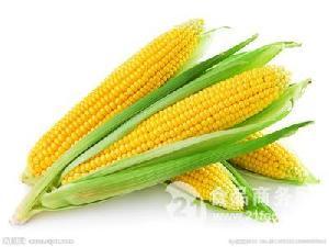玉米黄色素
