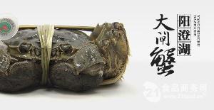 498型 阳澄湖大闸蟹