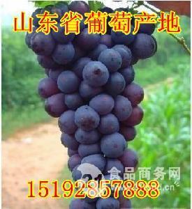 山东葡萄产地价格