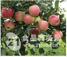山东苹果黄金梨产地