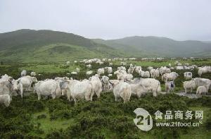 纯天然草原放养牦牛肉