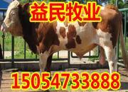 西门塔尔种牛价格