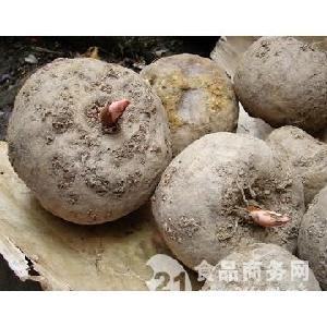 二代魔芋種子