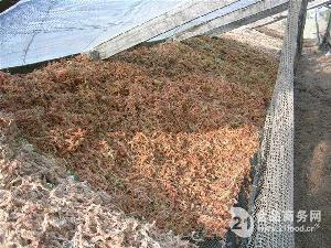 进口智利水苔