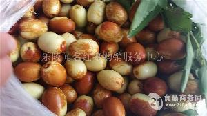鲜金丝枣成熟上市