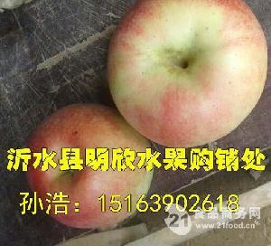 沂蒙山苹果