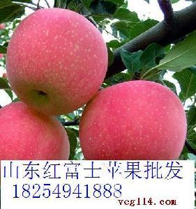 优质红富士苹果直销价格