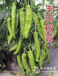 华泽辣椒种子--丰田椒霸