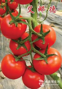华泽番茄种子-艾娜德