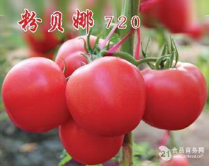 大果越冬番茄种子,粉贝娜720