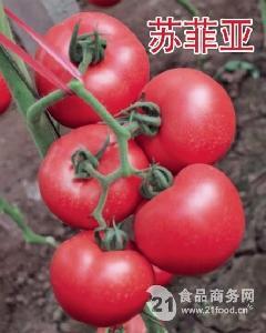 华泽番茄种子-苏菲亚