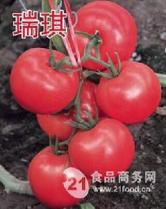 华泽番茄种子-瑞琪