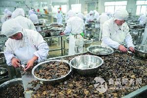 蘑菇生产线