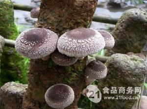 各类食用菌菌包