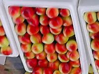 优质大棚 油桃