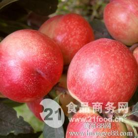 大棚油桃價格-大棚油桃批發價格