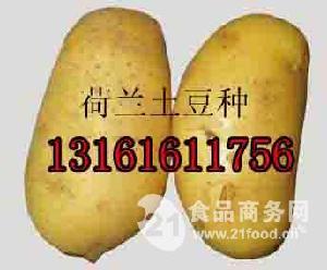 金辉颗源荷兰马铃薯种子