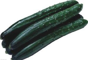 绿色无公害青瓜