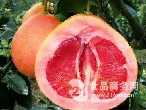 百亩大三红蜜柚苗批发销售,品种纯正,可签合同保障