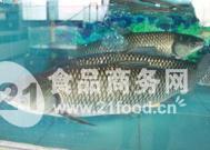 供应1-3斤5-7斤以上草鱼