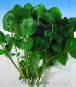 豆瓣菜种子-西洋菜种子-水田芥种子