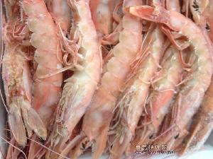 莫桑比克红虾