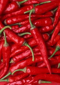 出售大板椒红辣椒