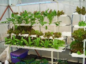 供应庭院阳台无土栽培设备技术蔬菜瓜果无土栽培种植水栽培技术