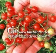 樱桃番茄-甜豆