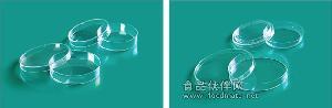 65x15mm培养皿,65mm培养皿价格 65mm培养皿说明