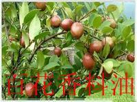 厂家供应纯天然精炼食品级 山茶油  野山茶油