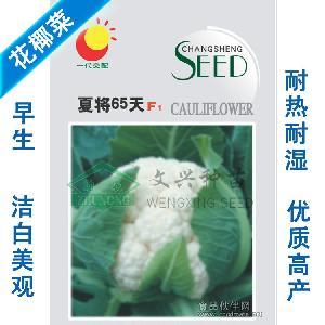 花椰菜种子-夏将65天 菜花种子