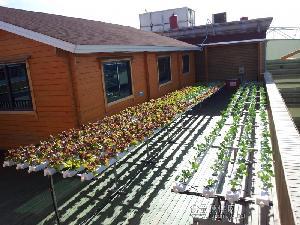 供应澳大利亚水培无土栽培新鲜蔬菜楼顶庭院休闲种植东莞兰天兴农